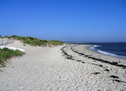 F0rest.beach